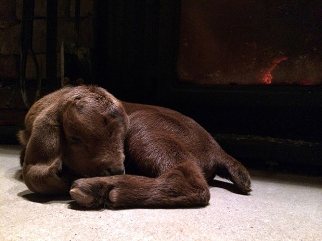 Riley naps on the hearth of our wood-burning stove. We lost Riley to illness a few months later, followed by his very best friend, Stella.
