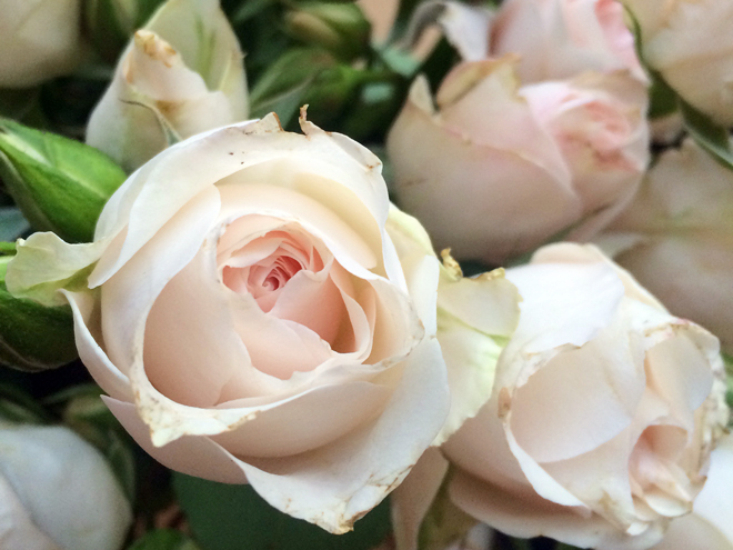 Early in the week, I purchased a bouquet of my favorite blushing roses. When the floral arrangements poured into the office Friday afternoon, my bouquet stood proudly upon my desk.